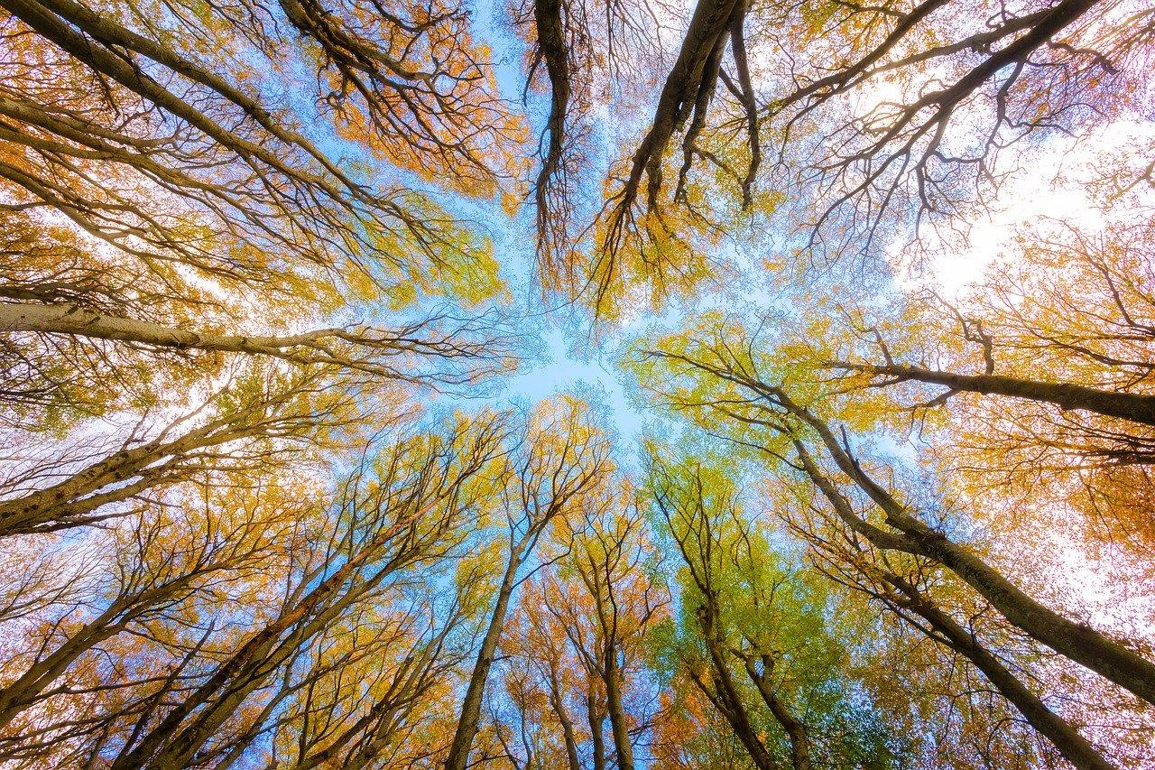 Forestazione urbana: sapessi com'è strano piantare alberi a Milano